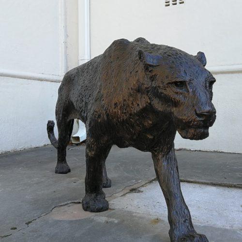 Stellenbosch Art Tours Leopard